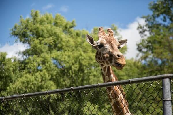 zoo-day-trip-cape-canaveral